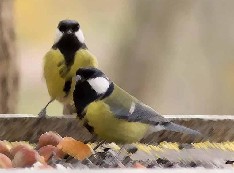 корм для птиц выбор для синиц