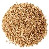 Семена тритикале, от 30 кг